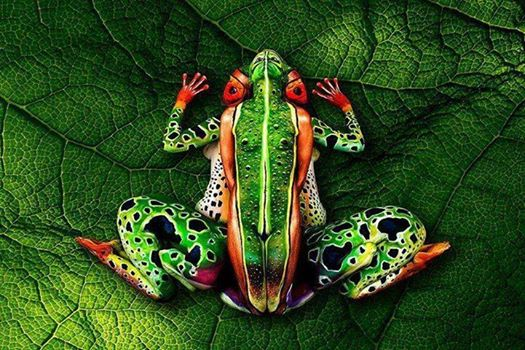 FrogArt